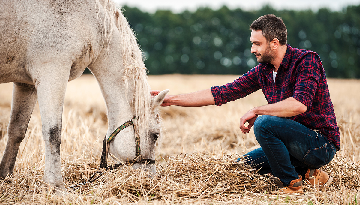 Pferde Kranken