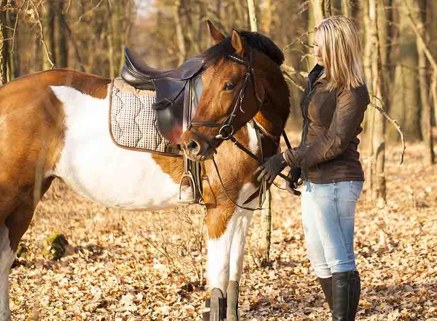 Pferde-OP