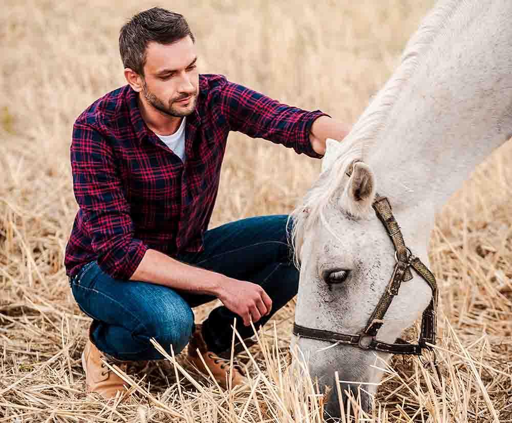 Pferde-Kranken