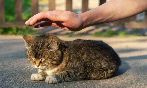Katzen Bestattungs-VS Kachel